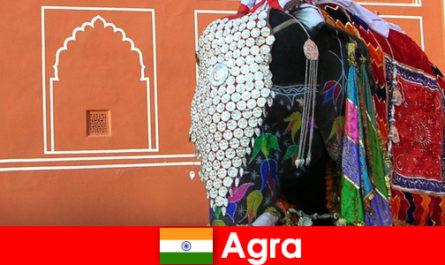 Turiștii sălbăticie în Agra iubesc varietatea de animale