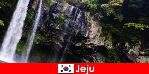 Jeju în Coreea de Sud insula vulcanică subtropicală cu păduri uimitoare pentru străini