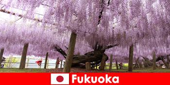 Excursii în natură pentru străini în natura neatinsă a Fukuoka Japonia