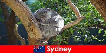 Destinație Sydney Australia în grădina zoologică exotice cu experiență peste noapte