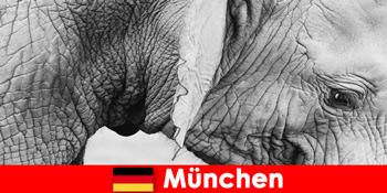 Excursie specială pentru vizitatorii celei mai originale grădini zoologice din Germania München